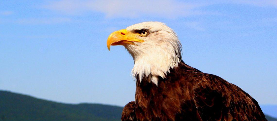 eagle-1009771_1920